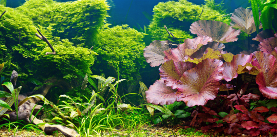 Caring for Live Aquarium Plants