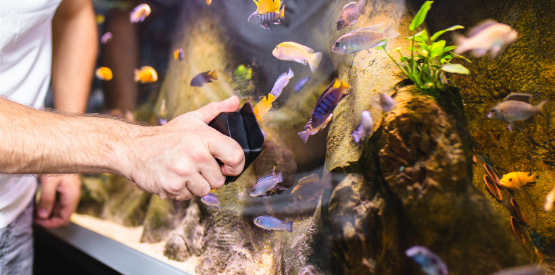 Treating Common Aquarium Problems