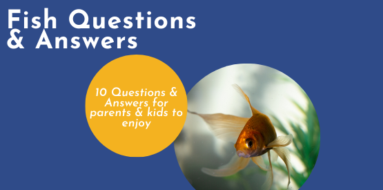 Fish Learning Fridays | Fish Questions & Answers