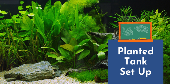 Fish Learning Fridays | Planted Tank Set Up