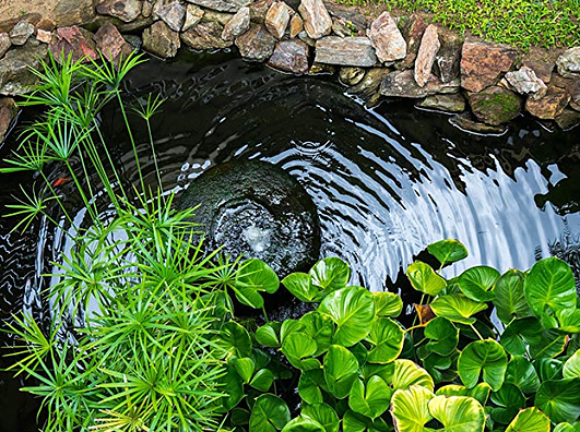 Controlling Algae in Your Pond
