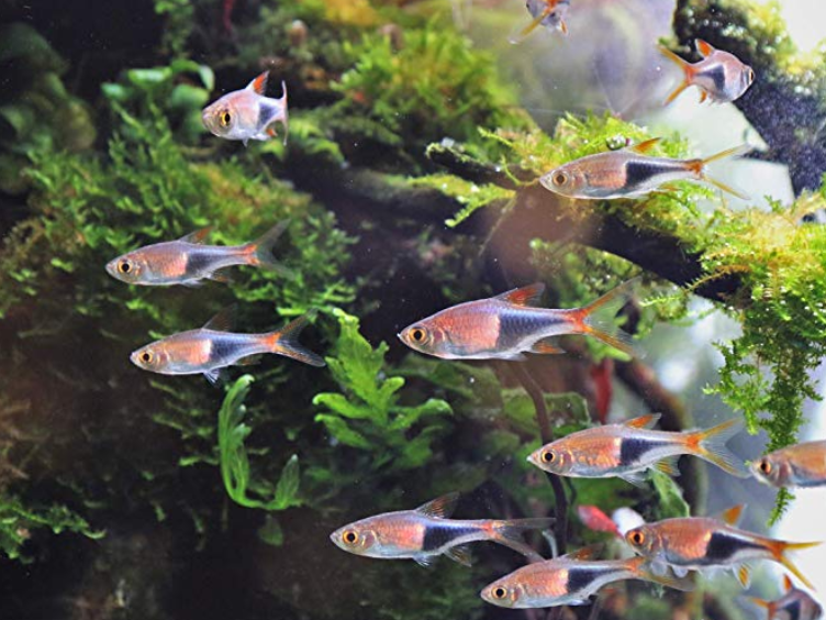 Spotlight Fish: Tropical Fish